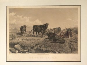 1869 Signed Engraving, 'Brittany Cattle'